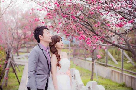 (D&L 婚禮事務)台中婚紗 婚紗攝影 泰安櫻花 自助婚紗 平面攝影