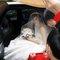 青青食尚花園會館婚禮記錄結婚迎娶婚禮記錄動態微電影錄影專業錄影平面攝影婚紗攝攝影婚禮主持人(編號:196716)