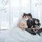 WEDDING(編號:492281)