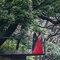 婚紗写真 - 東京/橫濱 海外婚紗(編號:1383956)