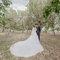Pre-Wedding(編號:619953)