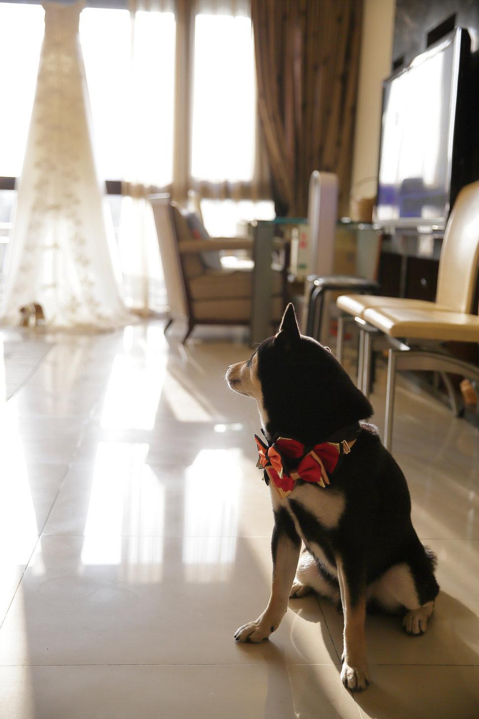 婚禮紀錄(編號:5294) - AC Photography - 結婚吧一站式婚禮服務平台