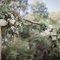 Ting & Fred - 五股準園 - Wedding - 戶外婚禮 - 美式婚禮紀錄 (62)