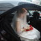 Wedding-0442