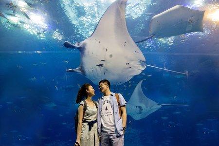 『海外婚紗』機長 老師 沖繩水族館
