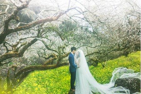 婚紗|婚紗照|婚紗攝影/春天邂逅的愛