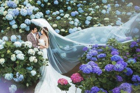 花海婚紗照|繡球花、櫻花、海芋