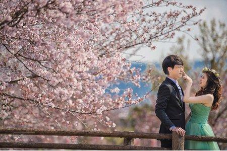 2016關西櫻之婚紗 (2017櫻花季3/26-3/31 4/3~4/10婚紗開始預定)