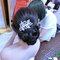芷辰 Bride 彰化(編號:261287)