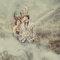 神秘的魔幻巨影-桔子&蝴蝶婚紗攝影(編號:310639)