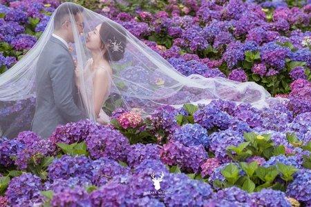 【季節限定】浪漫繡球花