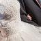 [婚攝] Ian & Claire│台北@1919婚宴廣場│結婚午宴@婚禮紀錄(編號:550205)