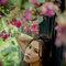 熾廣❤️喻涵  JUDY茱蒂文創婚禮  婚紗照  台北外拍景點 時尚曼谷 仙人掌園 (7)