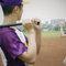 棒球情緣(編號:496703)