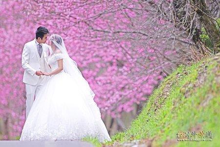 Taiwan櫻花 l 婚紗拍兩天 l 秋天的秘境