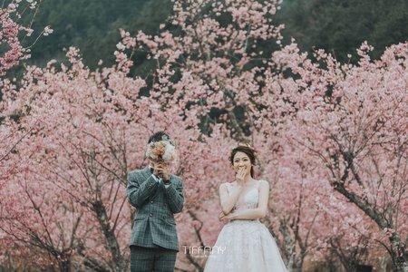 【季節限定】武陵櫻花