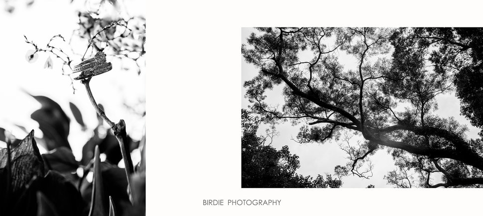 3-3 - 蘇鳥 Birdie & Uma Lab《結婚吧》