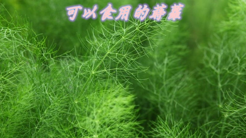 空瓶可回收種植小植栽