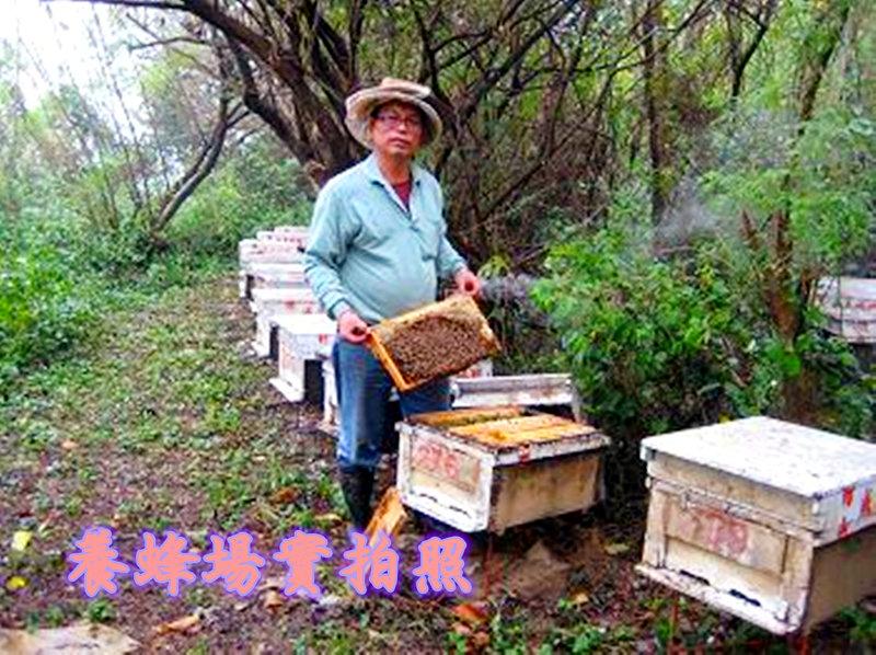 養蜂場實拍照