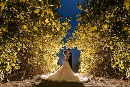 [自助婚紗] 台南森林唯美系婚紗|范特囍婚紗