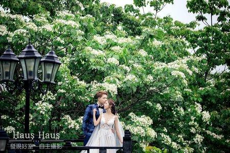 💙 浪漫四月桐五月雪 | HAUS