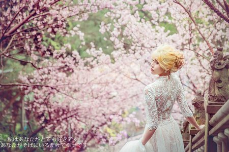 💙 櫻花季 | HAUS
