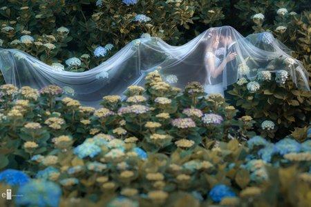 自助婚紗|繡球花季|eplus專業攝影