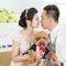婚紗攝影工作室-寵物婚紗 (1)