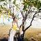 樹下的約定|浪漫草坪婚紗|慕思攝影01