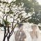 樹下的約定|浪漫草坪婚紗|慕思攝影04