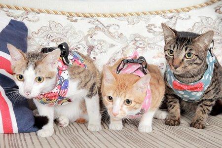 寵物肖像 | 寵物攝影棚