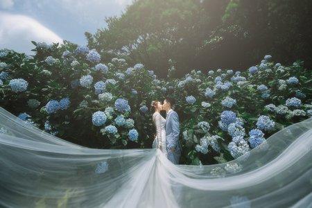 陽明山-繡球花