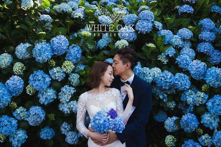 陽明山-森林-繡球花-擎天崗-小清新