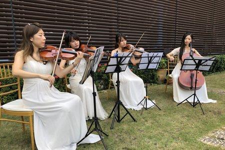 樂團主持演出❤️「西式證婚」高雄國賓