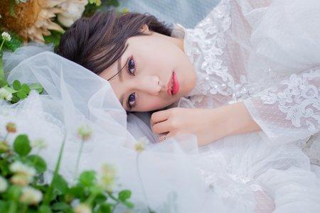 雛菊-花海-草原