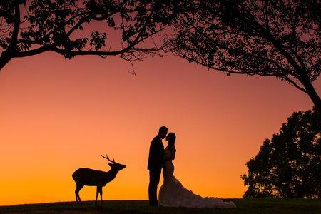 【奈良拍婚紗】海外婚紗包套:奈良婚紗攝影