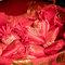 AhHo Wedding TEL-0937797161 lineID-chiupeiho (30 - 390)