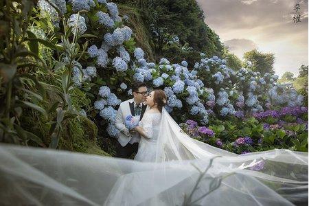 『婚紗包套』繡球花