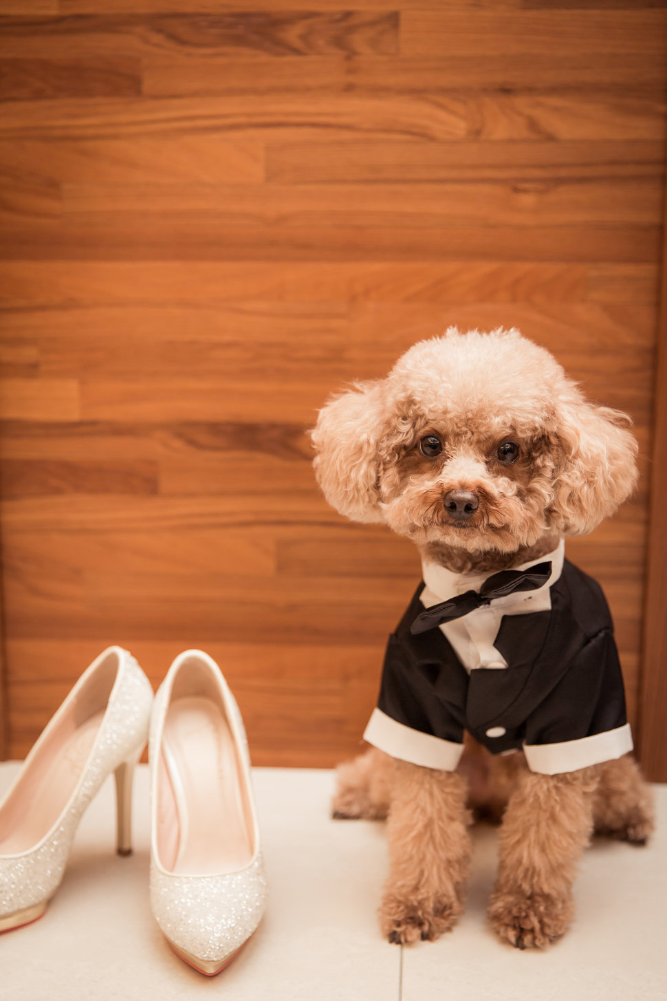 CHIN2017 - 哪隻狗Nacko - 結婚吧