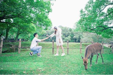 【奈良婚紗】- 小鹿亂撞,撞出我的女神