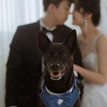 麗舍時尚婚紗,專業又暖心的麗舍婚紗攝影
